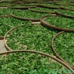 Особенности производства зеленого чая